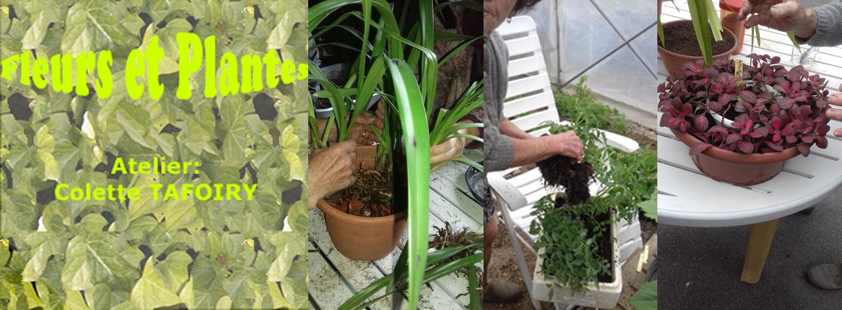 Atelier fleurs plantes modifie 1